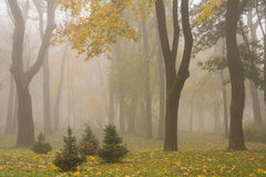 Mariinsky foggy park Royalty Free Stock Images