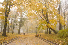 Mariinsky foggy park Stock Photos