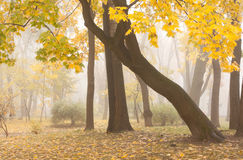 Mariinsky foggy park in Kiev Royalty Free Stock Image