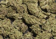 Marijuana royalty free stock images