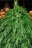 Marijuana Fotografia de Stock