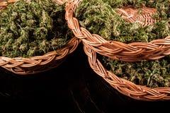 marijuana Imágenes de archivo libres de regalías