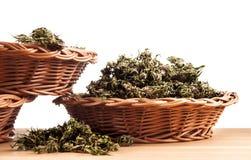 marijuana Fotos de archivo