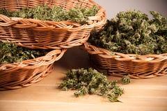 marijuana Foto de archivo