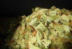 Marijuana Imagem de Stock Royalty Free