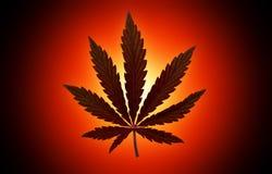 Marijuana  background. bush cannabis. Stock Image