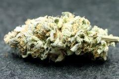 Marijuana bud. A closeup view of a bud from an marijuana plant Royalty Free Stock Photo