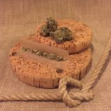 Marijuana buds and a joint. Buds of marijuana sitting on cork with an unrolled joint Stock Photo