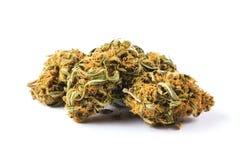 Marijuana buds  on white background Royalty Free Stock Images