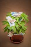 Marijuana Business Stock Photography