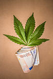 Marijuana business Royalty Free Stock Photography