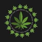 Marijuana - cannabis. Drugs Ruin Lives Royalty Free Stock Image