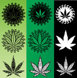 Marijuana cannabis green leaf  illustration Stock Images