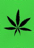 Marijuana (cannabis, hemp) Stock Photography