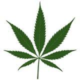 Marijuana. (Cannabis) - Hemp leaf illustration, Vector Royalty Free Stock Photo