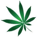 Marijuana. Cannabis leaf - a component of a narcotic substance marijuana. Vector illustration Royalty Free Stock Photo