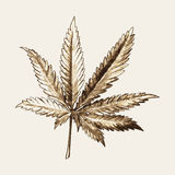 Marijuana or Cannabis Leaf Royalty Free Stock Photo