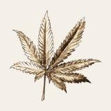 Marijuana or Cannabis Leaf Royalty Free Stock Photo