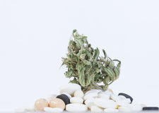 Marijuana and cannabis. legal drug. Medical marijuana and cannabis. legal drug stock photo