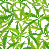 Marijuana, Cannabis seamless pattern. Vector background of leave Stock Photos