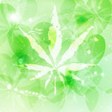 Marijuana or cannabis vector. Background Stock Images
