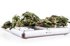 Marijuana en un fondo blanco Foto de archivo