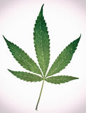 Marijuana Five Point Pot Leaf Classic Royalty Free Stock Photos