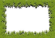 Marijuana frame. Illustration frame marijuana leaf on a white background Royalty Free Stock Photography