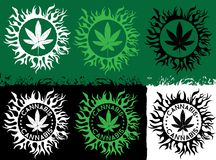 Marijuana green leaf icon stamp with organic texture background Royalty Free Stock Images