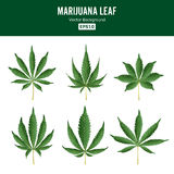 Marijuana Green Leaf Vector. Medicinal Herbs Collection. Cannabis Sativa or Cannabis Indica Illustration Isolated On Stock Image