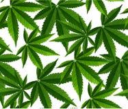 Marijuana lämnar den sömlösa modellen arkivbild