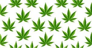 Marijuana lämnar den sömlösa vektormodellen royaltyfri fotografi