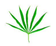 Marijuana leaf. Isolated on white royalty free stock photo