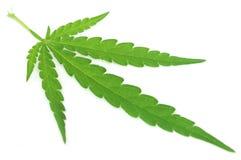 Marijuana Leaf Fotografie Stock