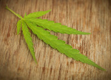 Marijuana Leaf Fotografia Stock
