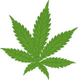 Marijuana leaf Royalty Free Stock Image