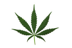 Marijuana Leaf Stock Photos