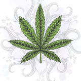 Marijuana leaf. Hand drawn isolated illustrations. Royalty Free Stock Photo