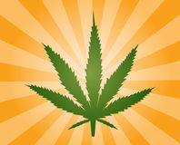 Marijuana leaf illustration Royalty Free Stock Image