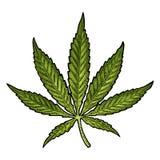 Marijuana Leaf Illustrazione nera d'annata dell'incisione di vettore Immagini Stock