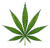 Marijuana Leaf Isolated Stock Image