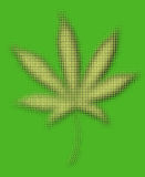 Marijuana leaf Stock Images