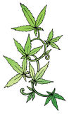 Marijuana leaf on the old watercolor paper background, vector image Stock Images
