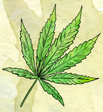 Marijuana leaf on the old watercolor paper background, vector image Stock Photography