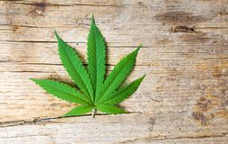 Marijuana leaf on rustic wooden background. Marijuana leaf on a rustic wooden background royalty free stock photography