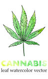 Marijuana leaf watercolor painting, vector image Royalty Free Stock Images