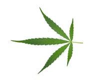 marijuana leaf on white background Stock Photography