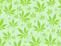 Marijuana leafs background Stock Photo
