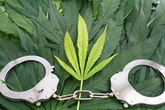 Marijuana leaves and hand cuffs, crime or addiction concept. Image Royalty Free Stock Photos