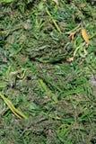Marijuana Leaves and Hemp Seeds Stock Image